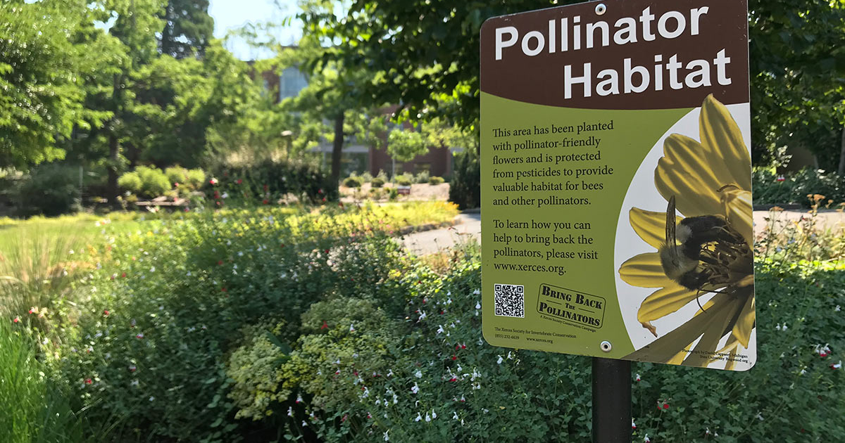 Pollinator Friendly