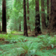 SOU's alternative spring break trips include a service opportunity in California's John Muir Woods