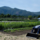 Wetlands are being restored at The Farm at SOU